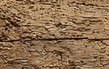 Eliminare le termiti dal legno: cosa sapere per procedere alla disinfestazione più adatta alle tue esigenze