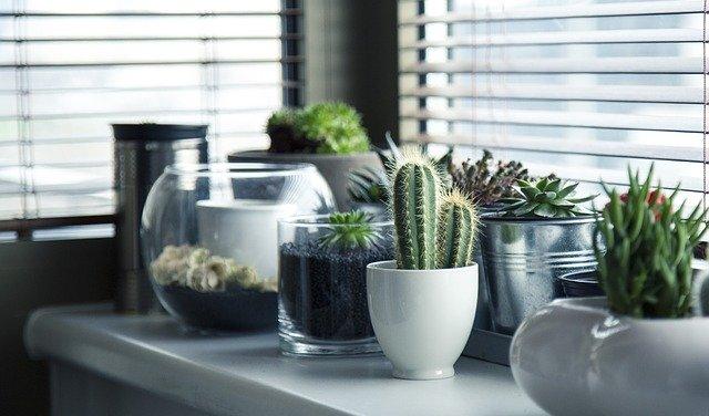 Ecco 10 piante ornamentali che non sapevi fossero velenose