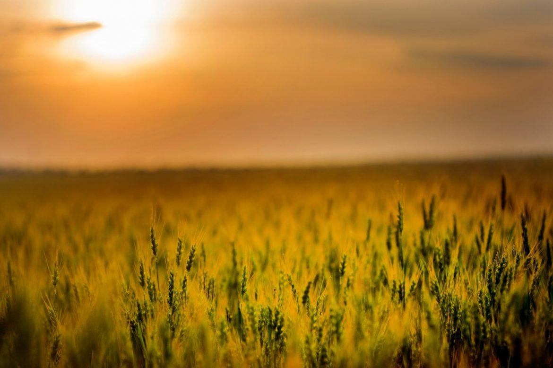 Come coltivare in modo biodinamico