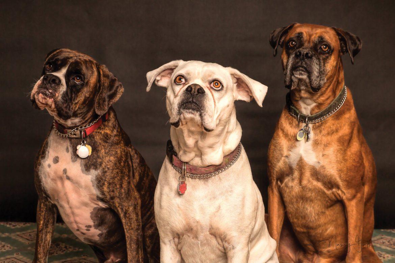 Come scegliere l'asilo per cani a Milano