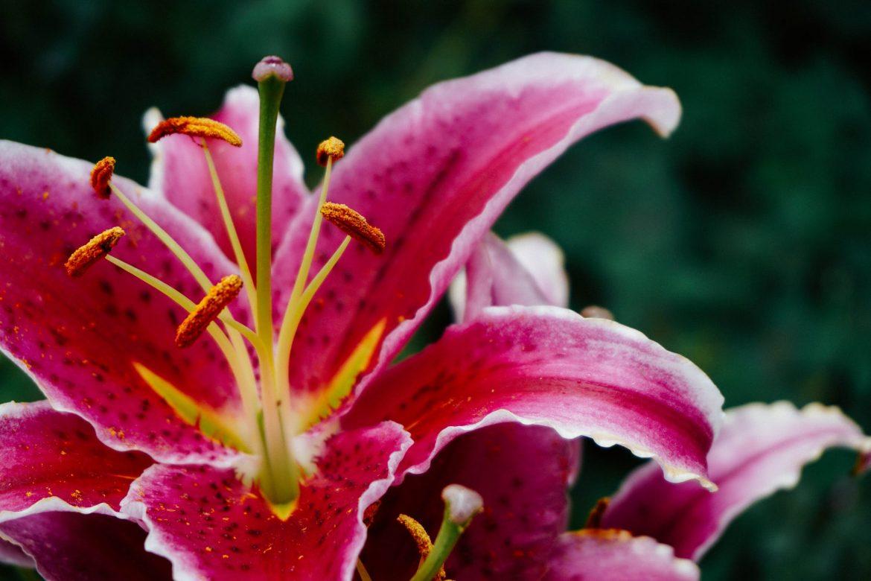 Consigli utili per la coltivazione delle orchidee